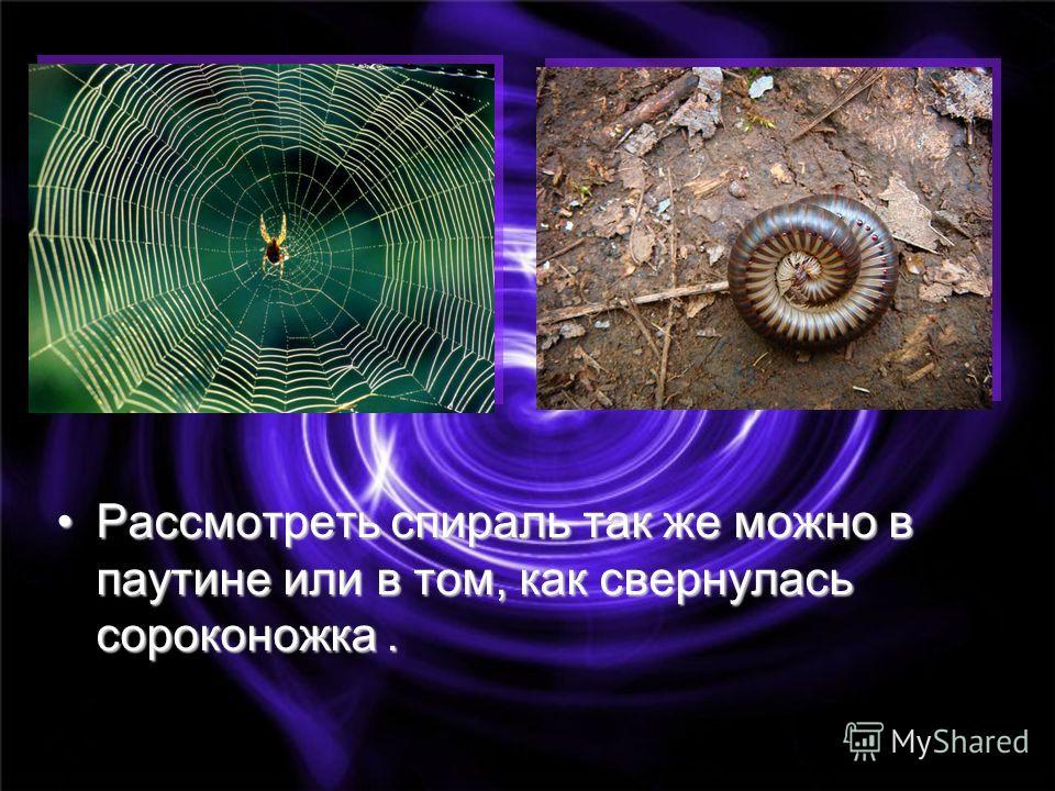 Рассмотреть спираль так же можно в паутине или в том, как свернулась сороконожка.Рассмотреть спираль так же можно в паутине или в том, как свернулась сороконожка.