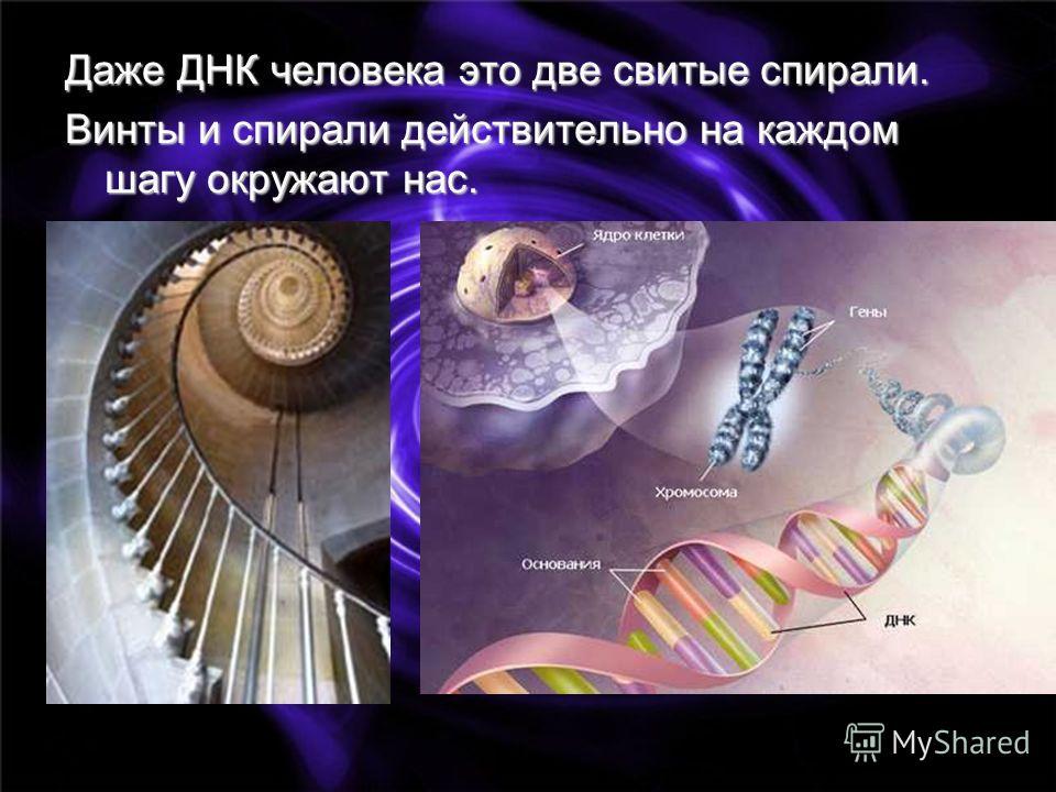 Даже ДНК человека это две свитые спирали. Винты и спирали действительно на каждом шагу окружают нас.