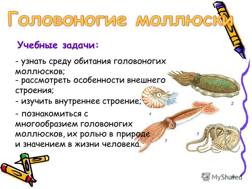 Учебные задачи: - узнать среду обитания головоногих моллюсков; - рассмотреть особенности внешнего строения; - изучить внутреннее строение; - познакомиться с многообразием головоногих моллюсков, их ролью в природе и значением в жизни человека. 6