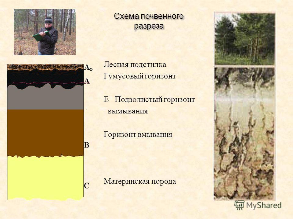 Схема почвенного разреза Лесная подстилка Гумусовый горизонт Е Подзолистый горизонт вымывания Горизонт вмывания Материнская порода