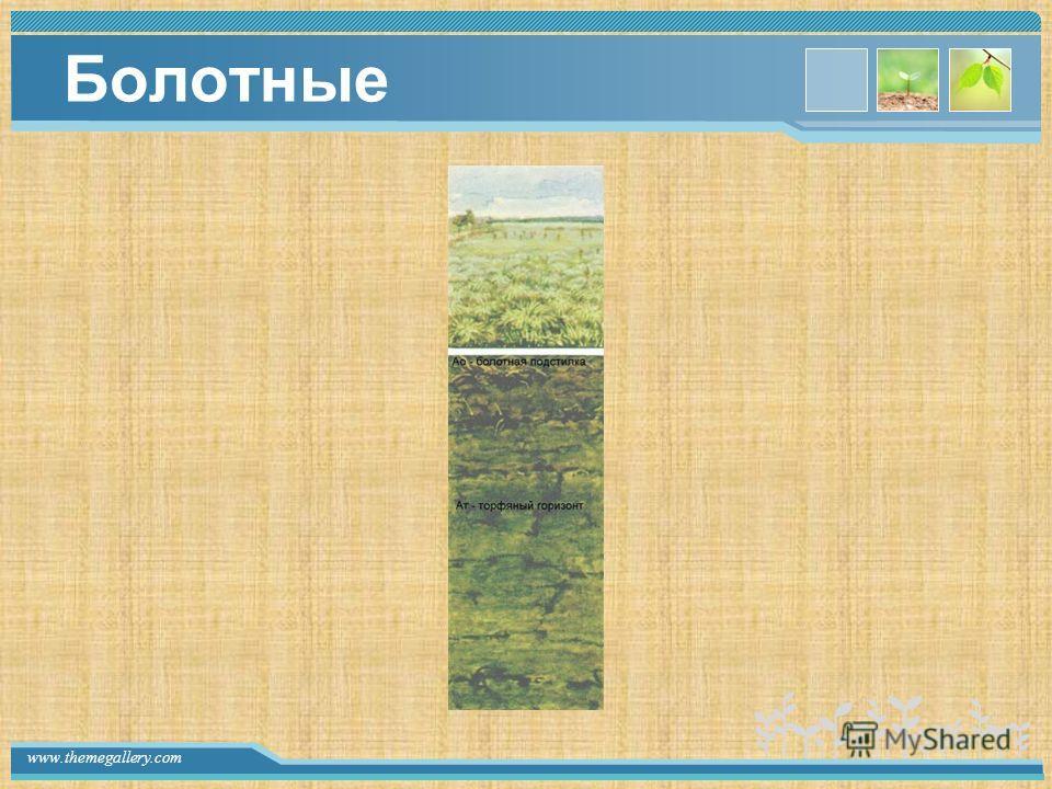 www.themegallery.com Болотные