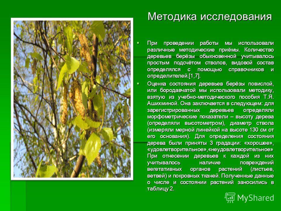 Методика исследования Методика исследования При проведении работы мы использовали различные методические приёмы. Количество деревьев берёзы обыкновенной учитывалось простым подсчётом стволов, видовой состав определялся с помощью справочников и опреде