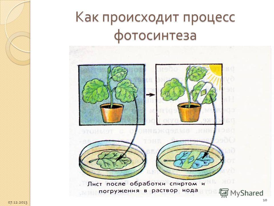 Как происходит процесс фотосинтеза 10 07.12.2013