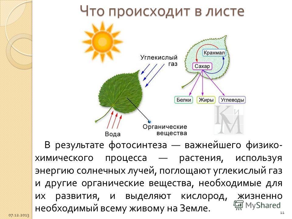 Что происходит в листе В результате фотосинтеза важнейшего физико - химического процесса растения, используя энергию солнечных лучей, поглощают углекислый газ и другие органические вещества, необходимые для их развития, и выделяют кислород, жизненно