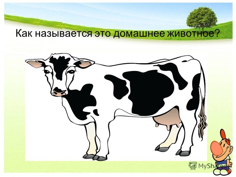Как называется это домашнее животное?