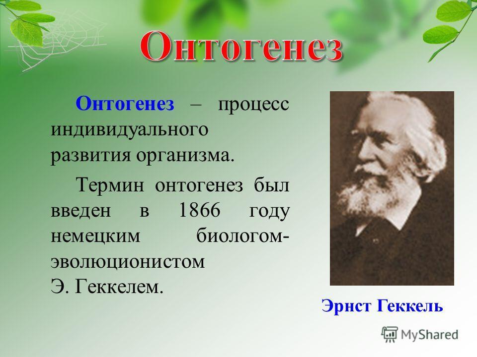 Онтогенез – процесс индивидуального развития организма. Термин онтогенез был введен в 1866 году немецким биологом- эволюционистом Э. Геккелем. Эрнст Геккель