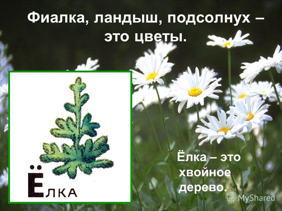 Фиалка, ландыш, подсолнух – это цветы. Ёлка – это хвойное дерево.