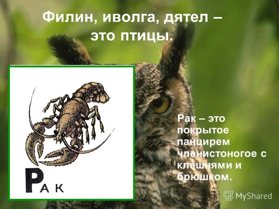 Филин, иволга, дятел – это птицы. Рак – это покрытое панцирем членистоногое с клешнями и брюшком.