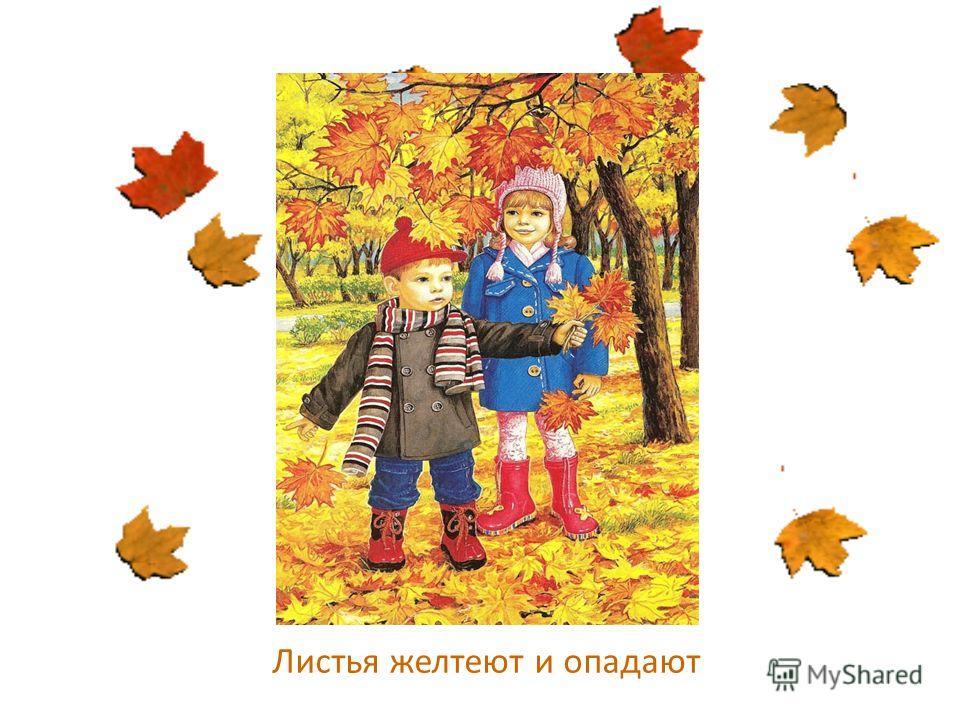 Листья желтеют и опадают