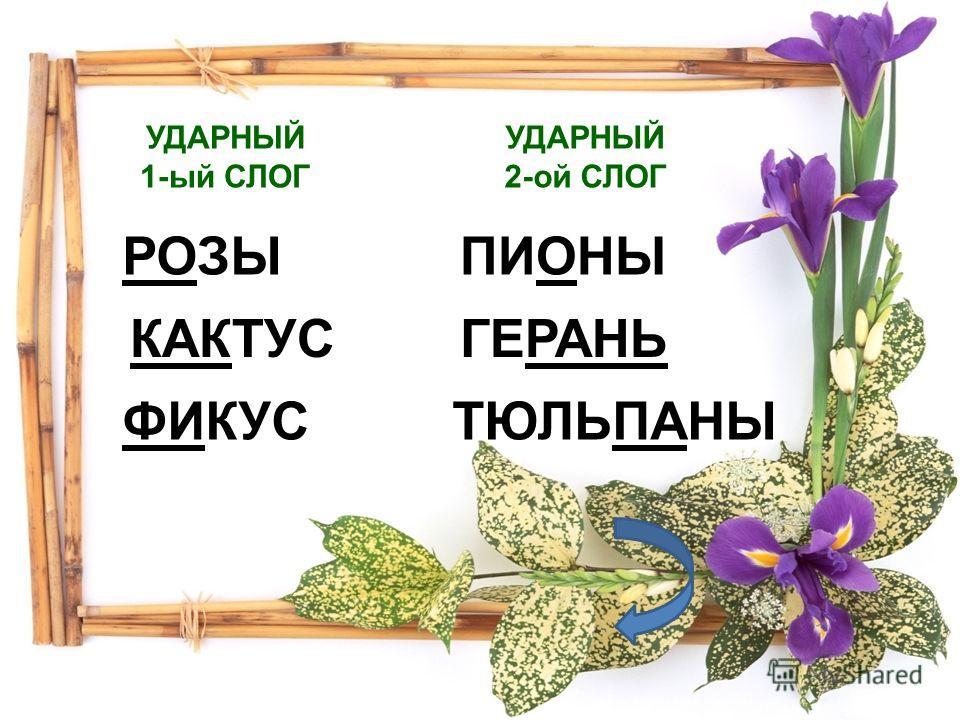 РОЗЫ КАКТУС ФИКУС ПИОНЫ ГЕРАНЬ ТЮЛЬПАНЫ УДАРНЫЙ 1-ый СЛОГ УДАРНЫЙ 2-ой СЛОГ