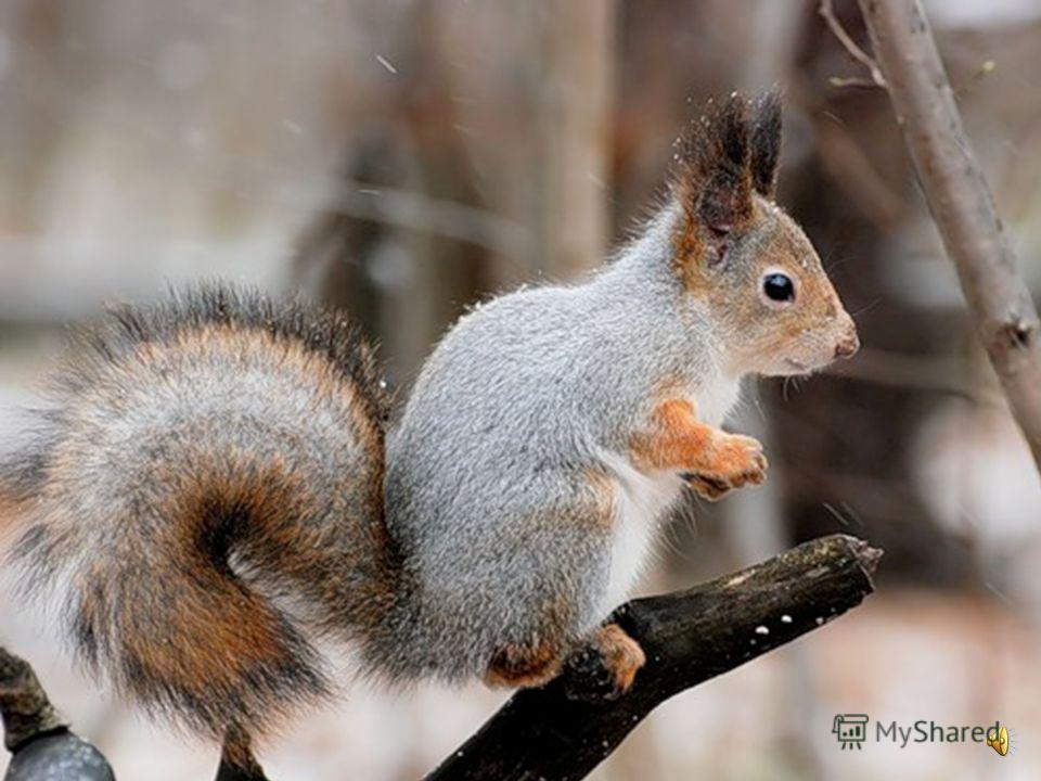 Как изменилась жизнь животных с наступлением зимы? Как изменилась жизнь животных с наступлением зимы