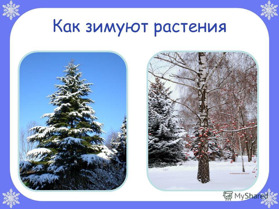 Природные явления зимой ОттепельГололедица Снегопад Метель Изморозь