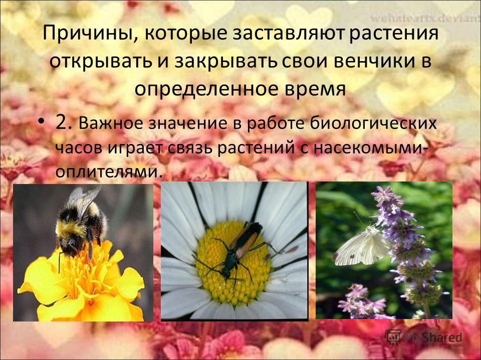 Причины, которые заставляют растения открывать и закрывать свои венчики в определенное время 2. Важное значение в работе биологических часов играет связь растений с насекомыми- оплителями.