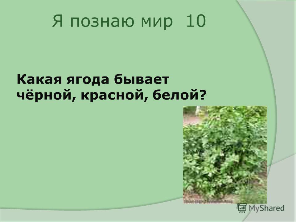 Я познаю мир 10 Какая ягода бывает чёрной, красной, белой?