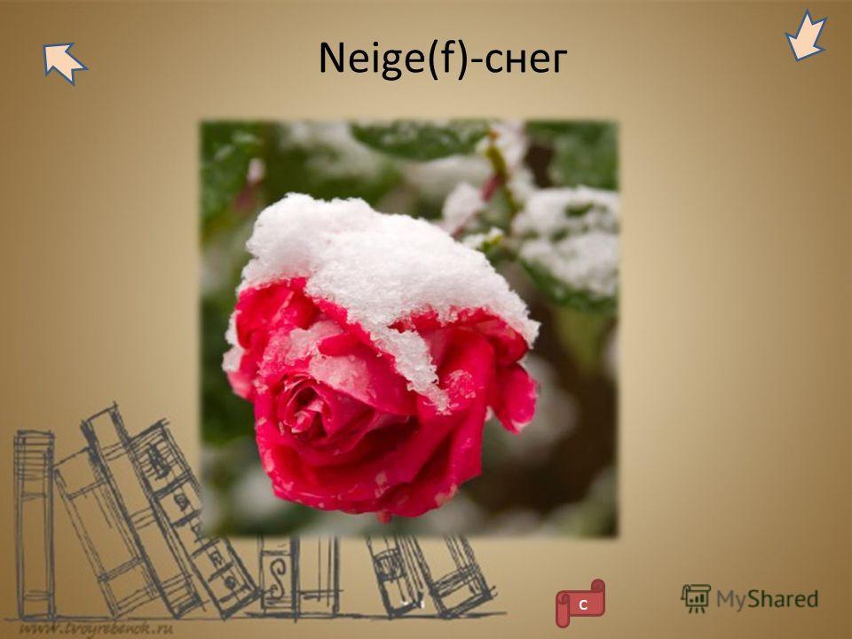 Neige(f)-снег с