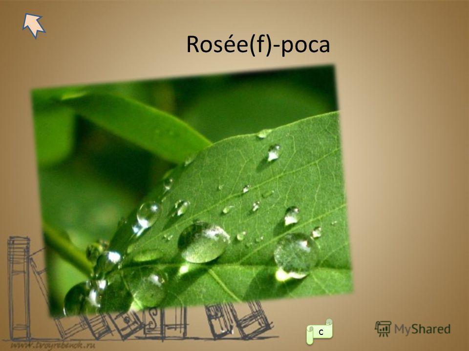 Rosée(f)-роса с с