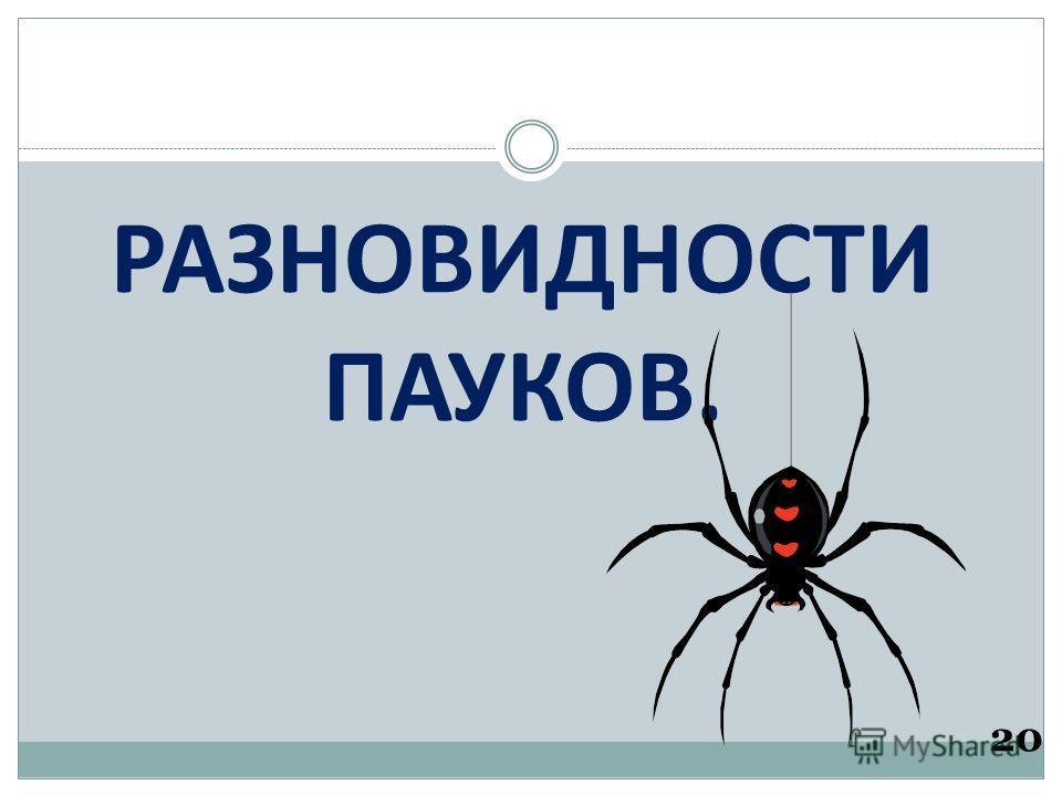 РАЗНОВИДНОСТИ ПАУКОВ. 20