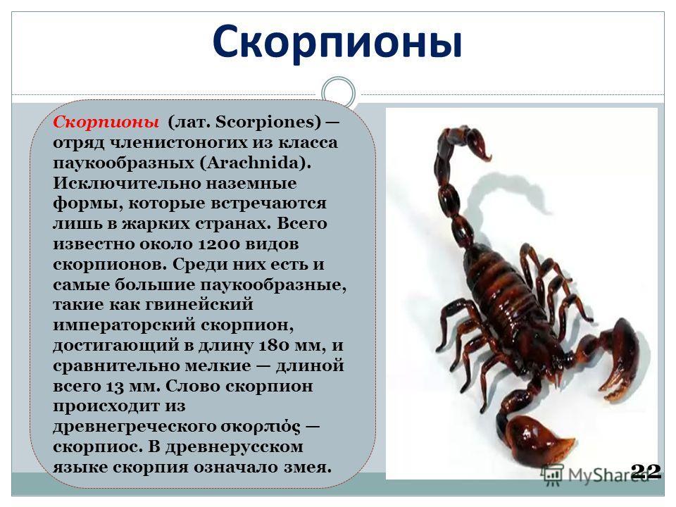 Скорпионы 22 Скорпионы (лат. Scorpiones) отряд членистоногих из класса паукообразных (Arachnida). Исключительно наземные формы, которые встречаются лишь в жарких странах. Всего известно около 1200 видов скорпионов. Среди них есть и самые большие паук
