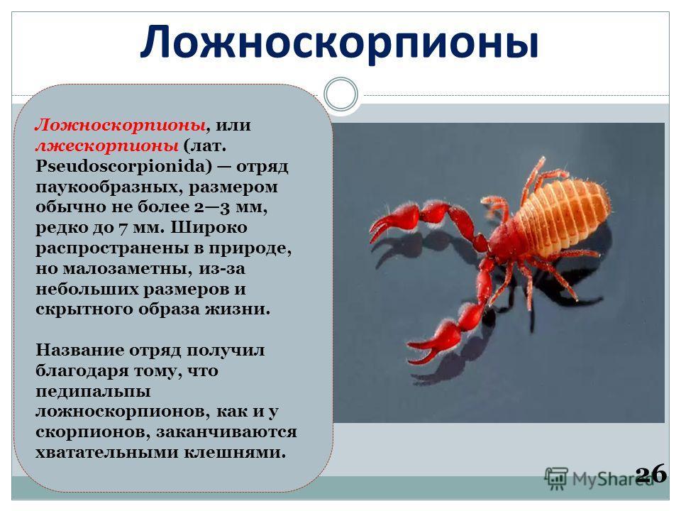 Ложноскорпионы 26 Ложноскорпионы, или лжескорпионы (лат. Pseudoscorpionida) отряд паукообразных, размером обычно не более 23 мм, редко до 7 мм. Широко распространены в природе, но малозаметны, из-за небольших размеров и скрытного образа жизни. Назван