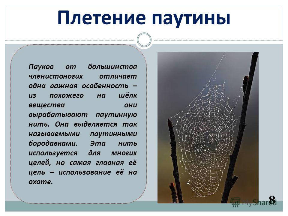 Плетение паутины 8 Пауков от большинства членистоногих отличает одна важная особенность – из похожего на шёлк вещества они вырабатывают паутинную нить. Она выделяется так называемыми паутинными бородавками. Эта нить используется для многих целей, но