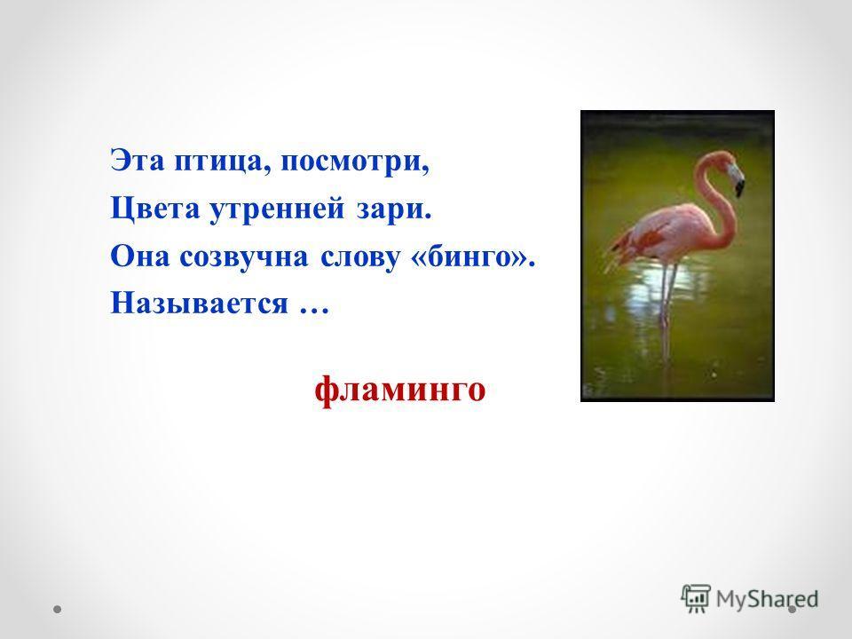 Эта птица, посмотри, Цвета утренней зари. Она созвучна слову «бинго». Называется … фламинго