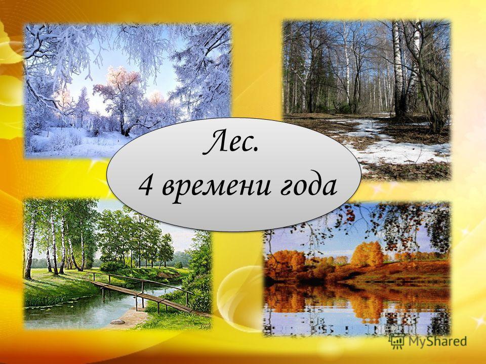 Лес. 4 времени года