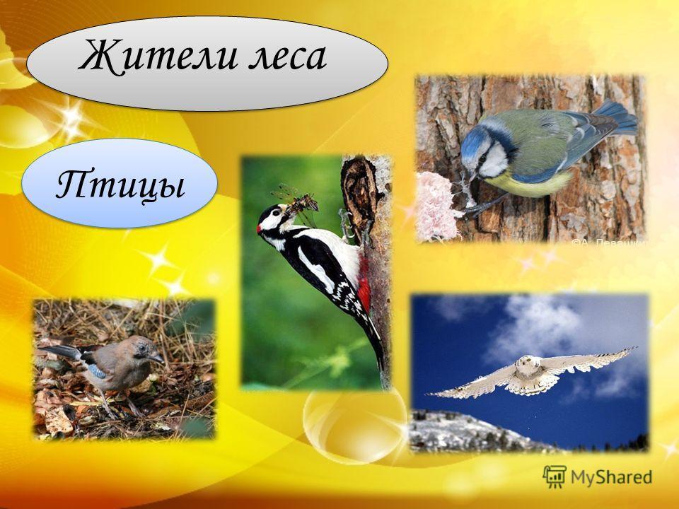 Жители леса Птицы
