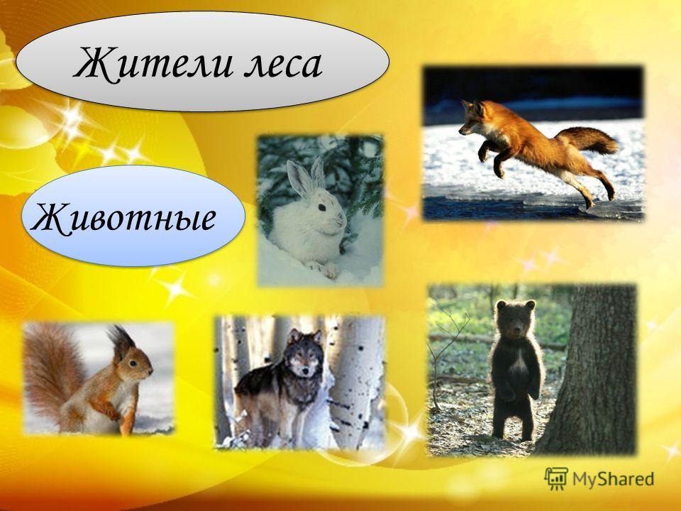 Жители леса Животные