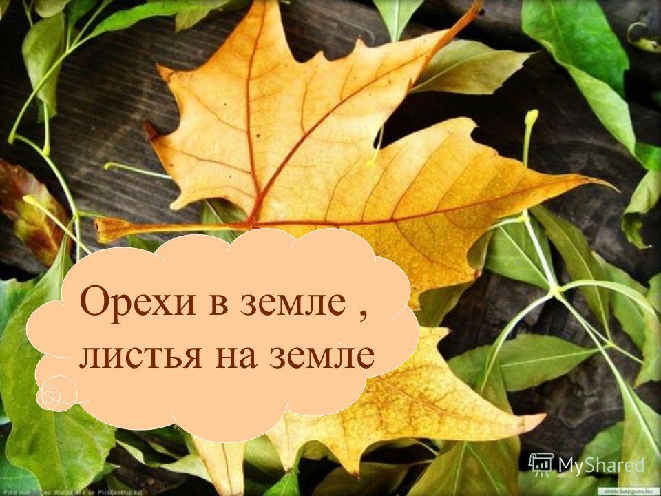 Орехи в земле, листья на земле