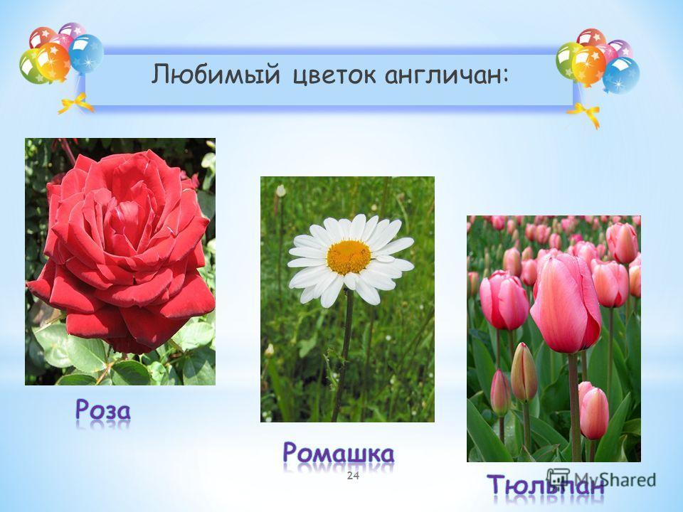 Любимый цветок англичан: 24