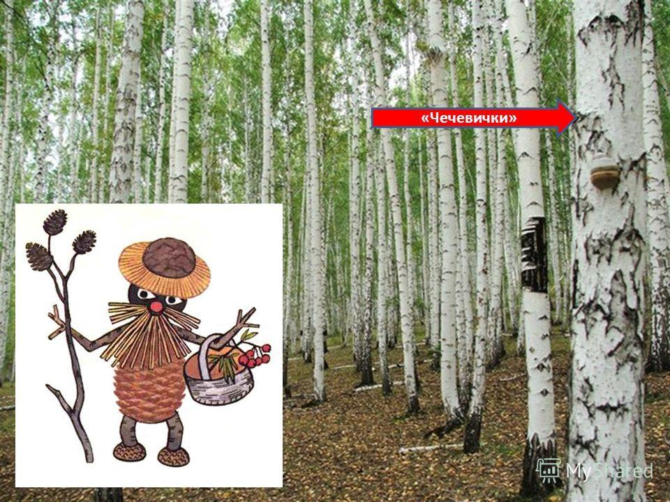 Какие деревья вы знаете?