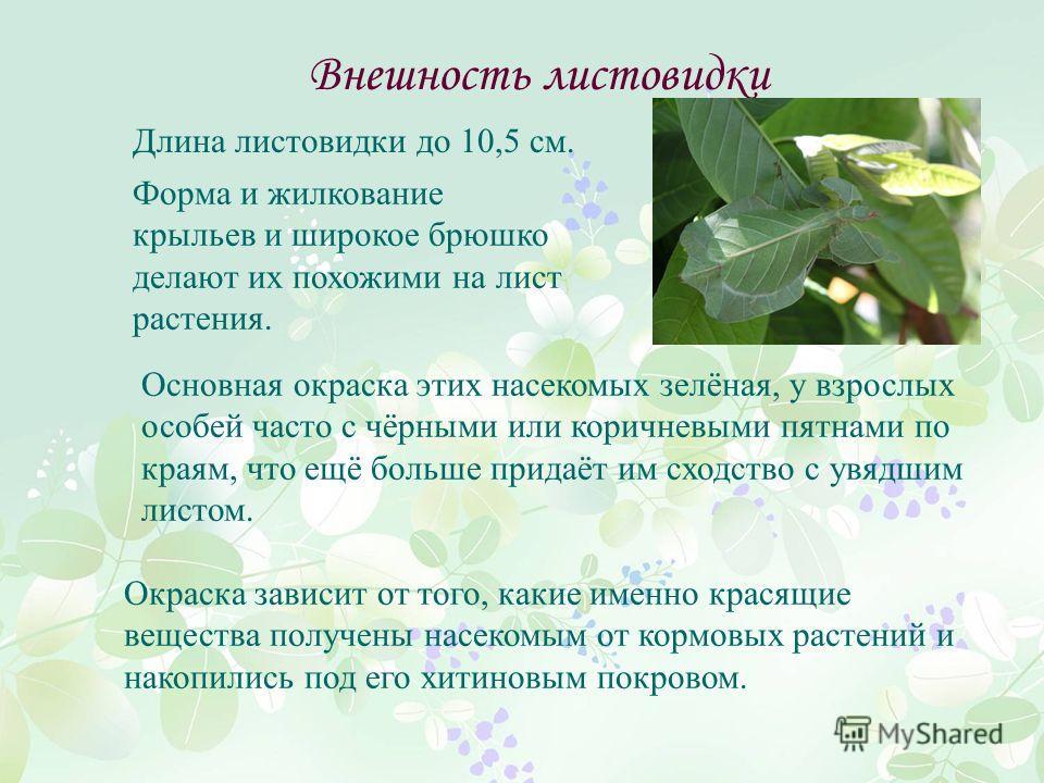 Внешность листовидки Форма и жилкование крыльев и широкое брюшко делают их похожими на лист растения. Окраска зависит от того, какие именно красящие вещества получены насекомым от кормовых растений и накопились под его хитиновым покровом. Основная ок