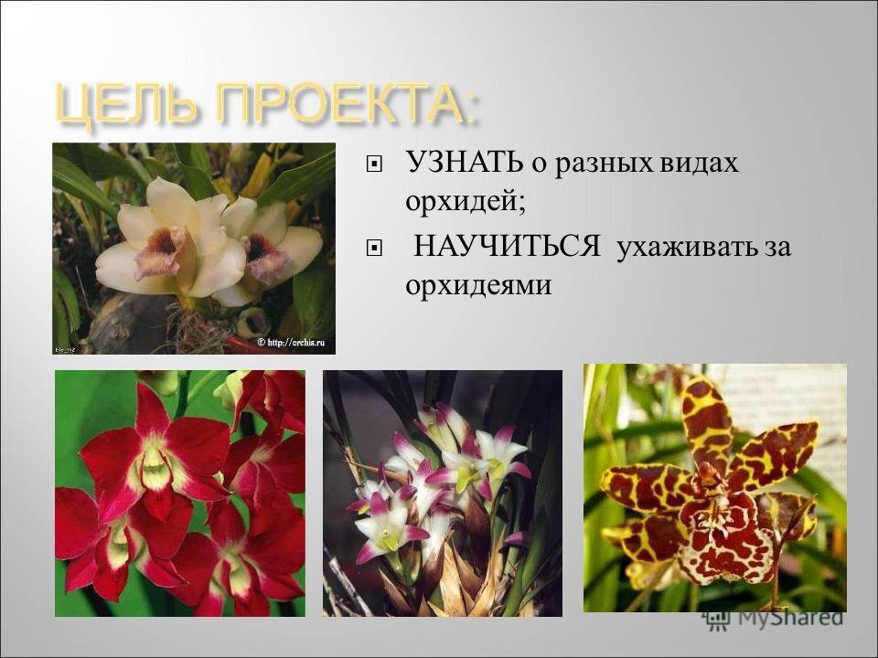УЗНАТЬ о разных видах орхидей ; НАУЧИТЬСЯ ухаживать за орхидеями