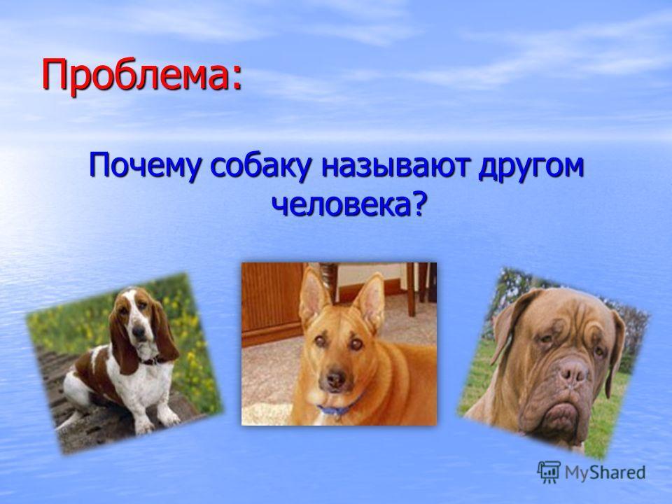 Проблема: Почему собаку называют другом человека?