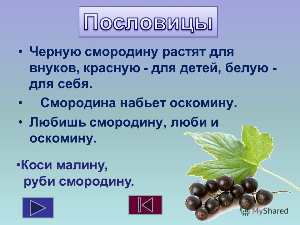 Черную смородину растят для внуков, красную - для детей, белую - для себя. Смородина набьет оскомину. Любишь смородину, люби и оскомину. Коси малину, руби смородину.