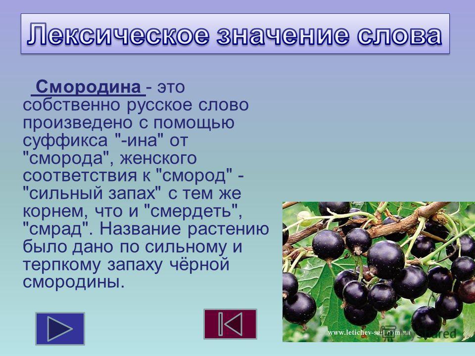 Смородина - это собственно русское слово произведено с помощью суффикса