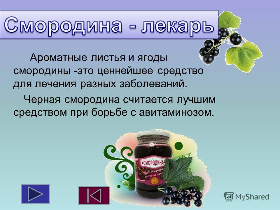 Ароматные листья и ягоды смородины -это ценнейшее средство для лечения разных заболеваний. Черная смородина считается лучшим средством при борьбе с авитаминозом.