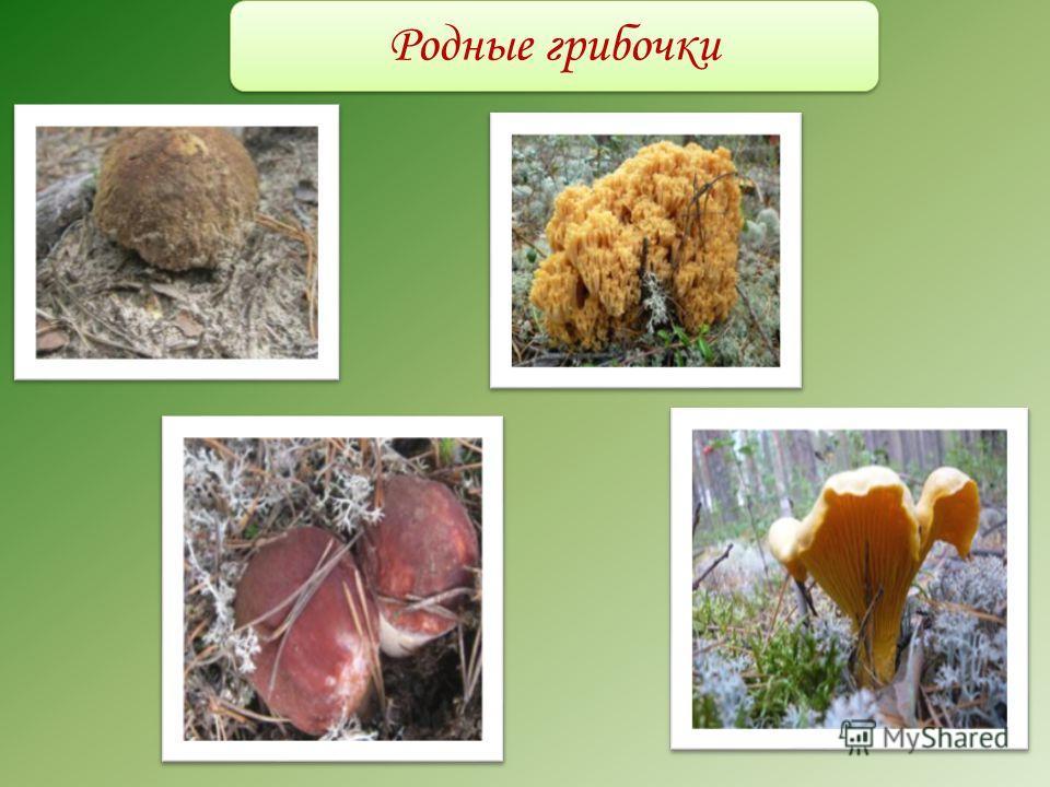 Родные грибочки