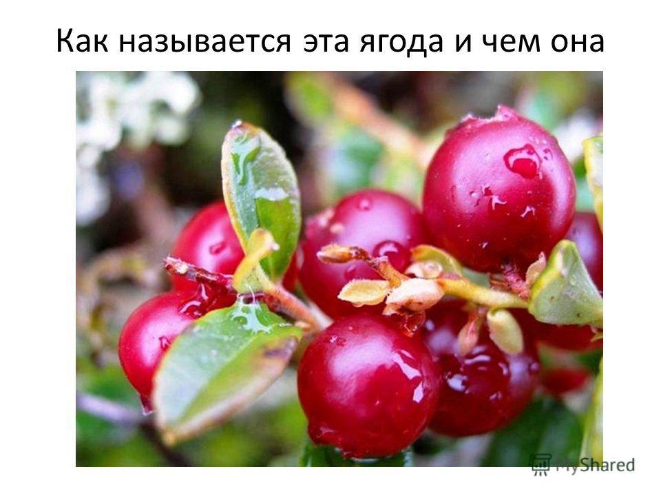 Как называется эта ягода и чем она полезна?