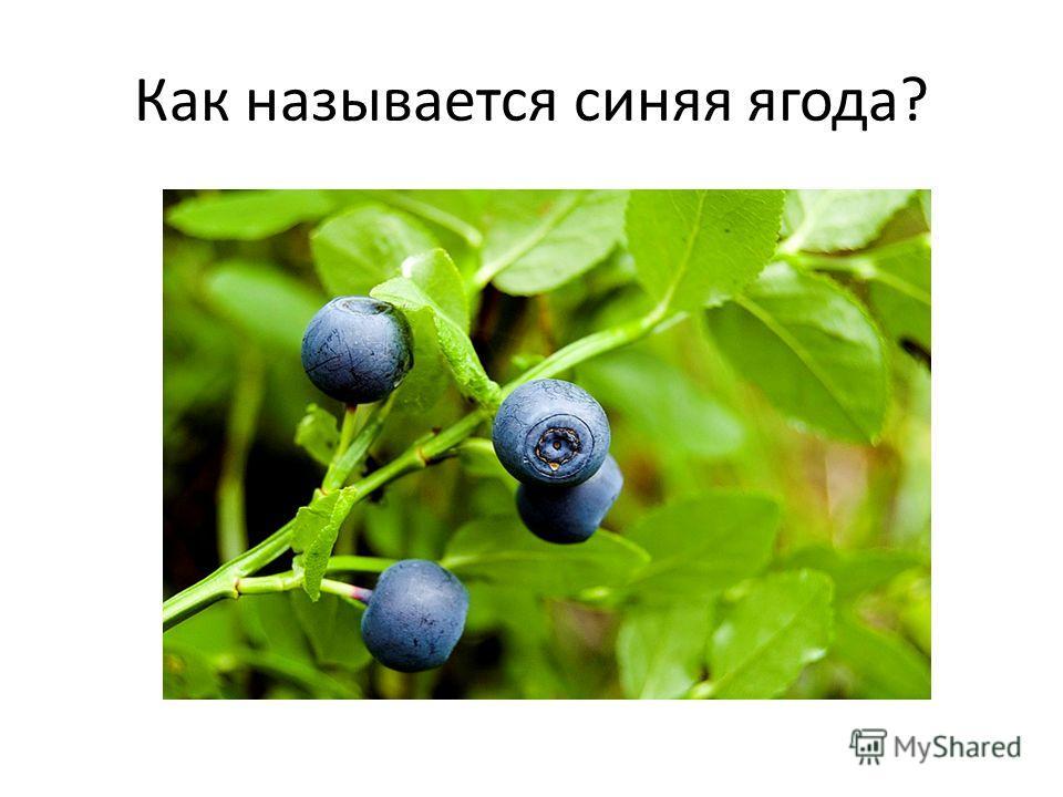 Как называется синяя ягода?