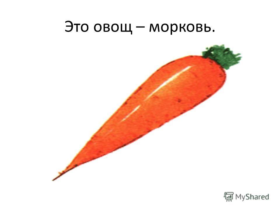 Это овощ – морковь.