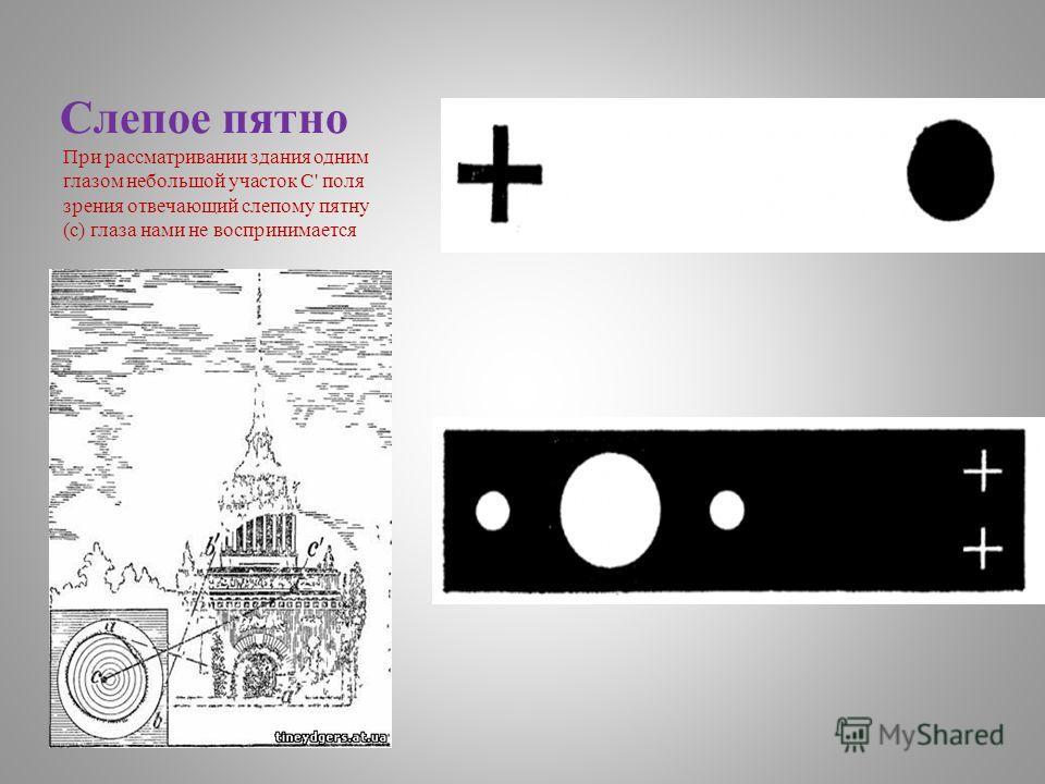 Слепое пятно При рассматривании здания одним глазом небольшой участок C' поля зрения отвечающий слепому пятну (с) глаза нами не воспринимается