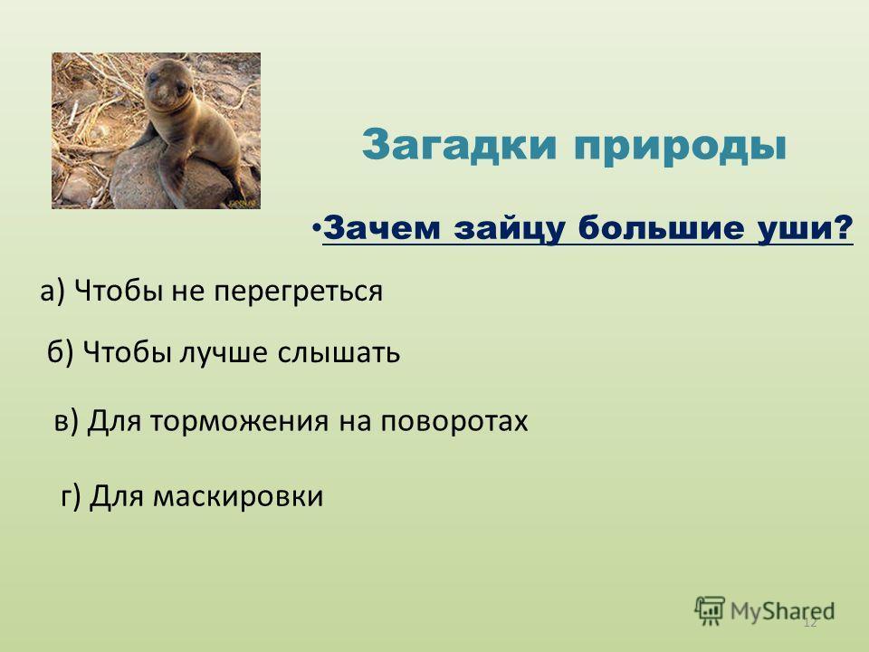 Загадки природы Зачем зайцу большие уши? а) Чтобы не перегреться б) Чтобы лучше слышать в) Для торможения на поворотах г) Для маскировки 12