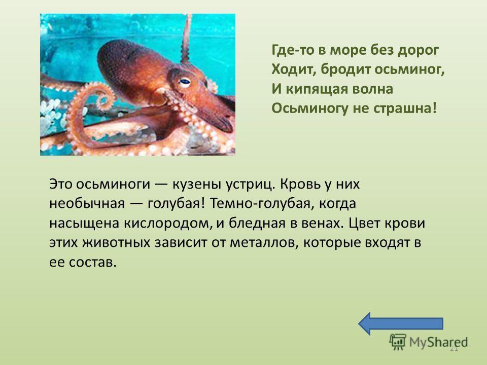 Это осьминоги кузены устриц. Кровь у них необычная голубая! Темно-голубая, когда насыщена кислородом, и бледная в венах. Цвет крови этих животных зависит от металлов, которые входят в ее состав. Где-то в море без дорог Ходит, бродит осьминог, И кипящ