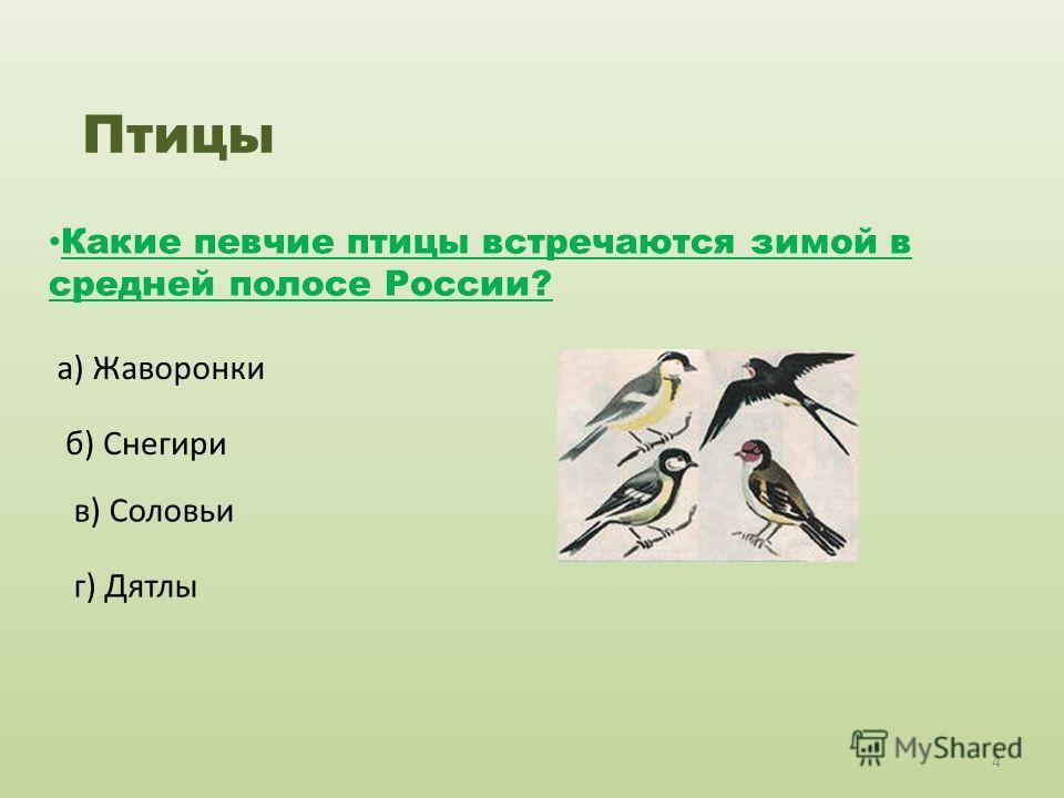 Птицы Какие певчие птицы встречаются зимой в средней полосе России? а) Жаворонки б) Снегири в) Соловьи г) Дятлы 4