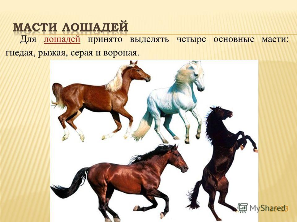 15/23 Для лошадей принято выделять четыре основные масти: гнедая, рыжая, серая и вороная.лошадей