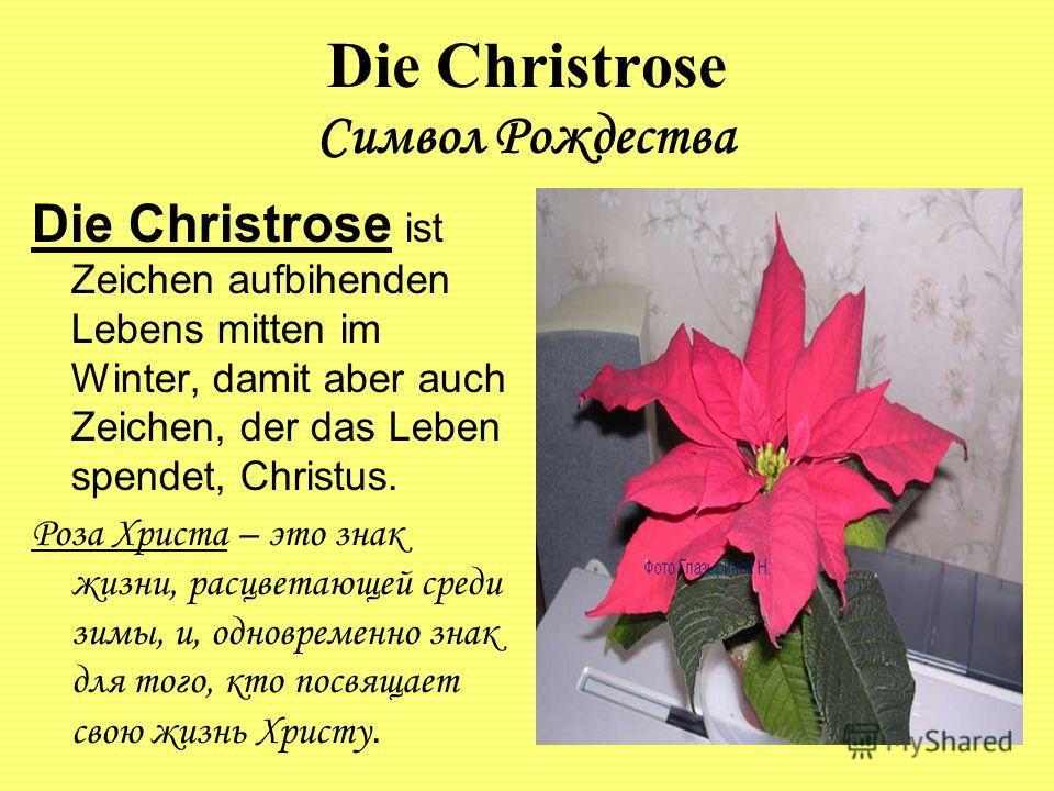 Die Christrose Символ Рождества Die Christrose ist Zeichen aufbihenden Lebens mitten im Winter, damit aber auch Zeichen, der das Leben spendet, Christus. Роза Христа – это знак жизни, расцветающей среди зимы, и, одновременно знак для того, кто посвящ