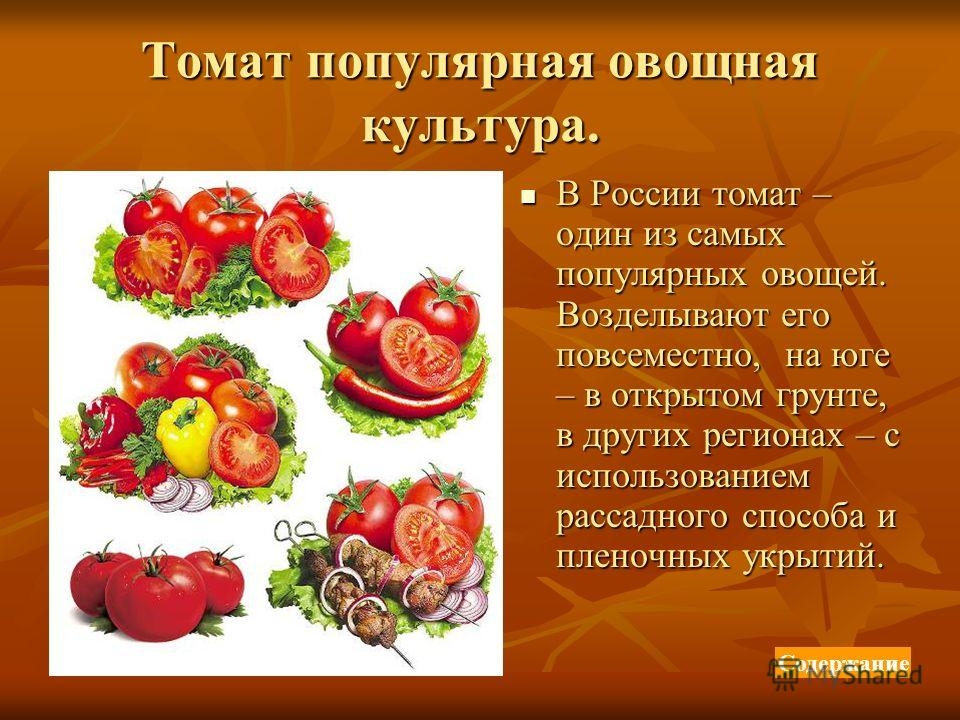 Томат популярная овощная культура. В России томат – один из самых популярных овощей. Возделывают его повсеместно, на юге – в открытом грунте, в других регионах – с использованием рассадного способа и пленочных укрытий. В России томат – один из самых