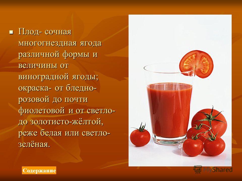Плод- сочная многогнездная ягода различной формы и величины от виноградной ягоды; окраска- от бледно- розовой до почти фиолетовой и от светло- до золотисто-жёлтой, реже белая или светло- зелёная. Плод- сочная многогнездная ягода различной формы и вел
