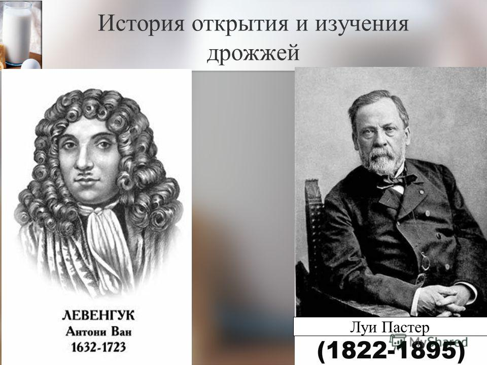 История открытия и изучения дрожжей Луи Пастер